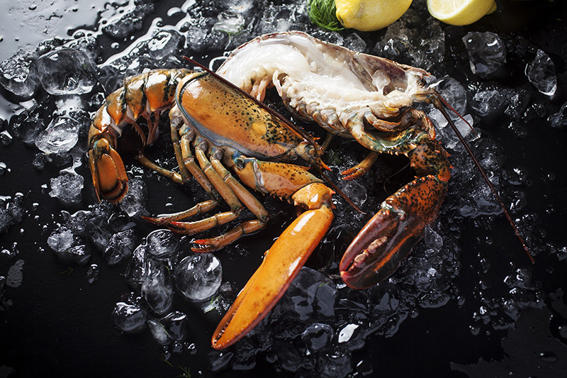 Cold-water lobster are often sold live, in the same manner as the rock lobster. They always have an elastic band around their claws that should be left on until the animal have been killed, removing the band while the animal is still alive can lead to injury.